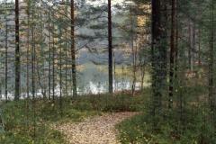 Metsäpolku ja lampi